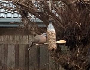 Enjoying the bird feeder in the garden