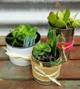 Mini Succulent Garden made from Recycled Tin Cans