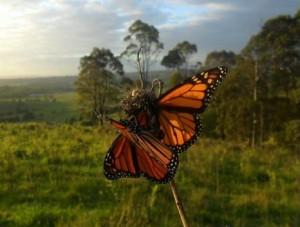Junior Landcare Backyard photo of butterflies