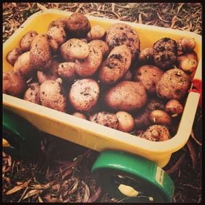 Kids love potatoes
