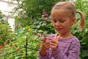 butterfly garden for children