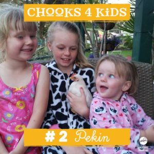 chooks-4-kids-2