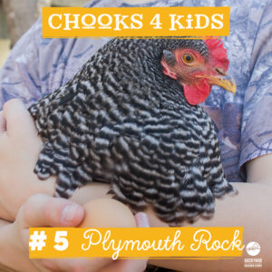 chooks-4-kids-5