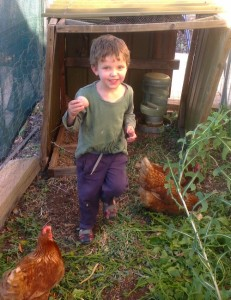 Chickens provide fresh eggs every day