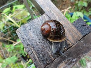Kids find snails fascinat