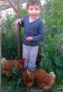 Kids love chickens