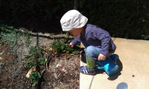 Gardening is fun for our toddler