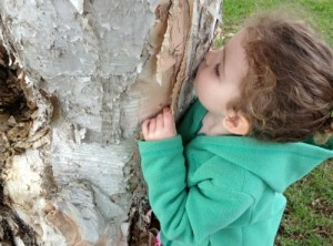 Paperbark trees are great for kids