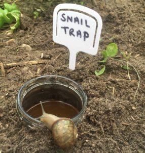 Vegemite Snail Trap