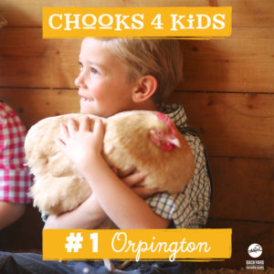 chooks-4-kids-1