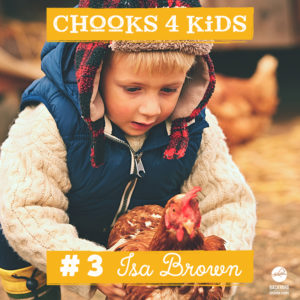 chooks-4-kids-3