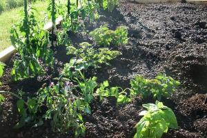 mackenzies garden 2