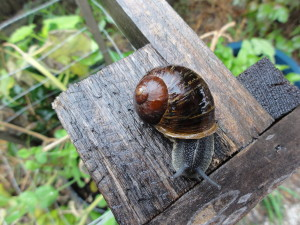 Kids find snails fascinat